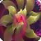 3D花朵梦幻壁纸 V1.0