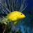 水族馆高清动态壁纸 V1.0