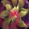 3D花朵梦幻壁纸