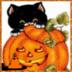 南瓜猫生活壁纸-icon
