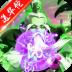 御剑三国-毒将版-icon