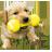 养狗狗 V1.2.3