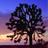 潘多拉桌面之加利福尼亚主题 V1.0.0