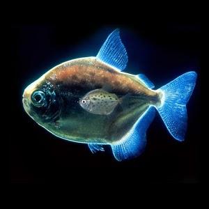 壁纸 动态 食人鱼/食人鱼3D水族馆的LWP V 1.0.7