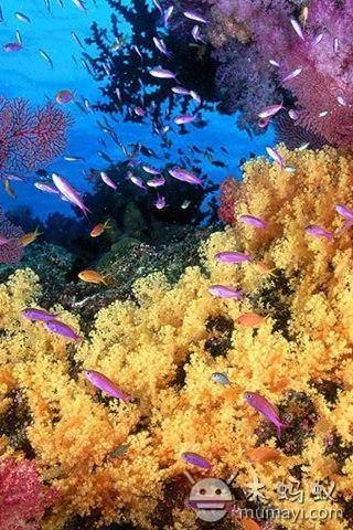 高清海底世界壁紙 下載_高清海底世界壁紙 手機版下載