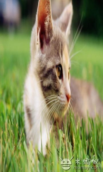 可爱猫咪萌翻你双眼,里面黄色的盯着树看的那只是我