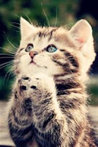 动物铃声壁纸下载_动物铃声壁纸手机版下载