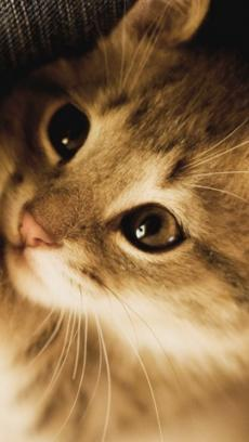 超萌猫咪壁纸 v1.1.