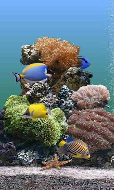 海底世界動態高清壁紙下載_海底世界動態高清壁紙手機