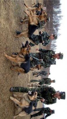 军犬警犬训练教学视频V1.0_音乐视频_软件_木