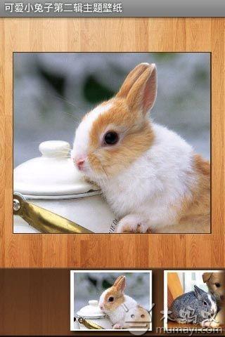 可爱小兔子壁纸app1.0