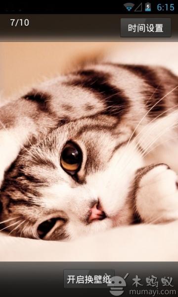 桌面壁纸-可爱萌猫下载