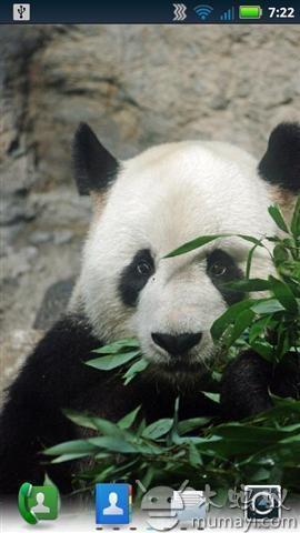 可爱的熊猫动态壁纸 v2.4.0