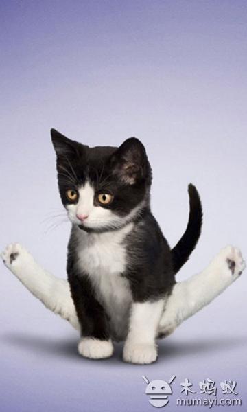 壁纸 动物 狗 狗狗 猫 猫咪 小猫 桌面 360_600 竖版 竖屏 手机
