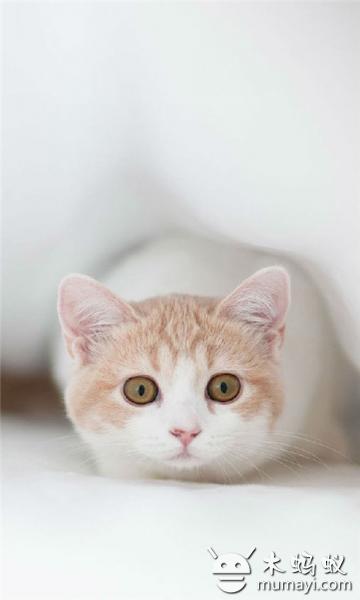可愛萌寵貓咪動態壁紙下載