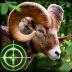荒野猎手无限金币版 Wild Hunter V1.0.5