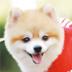 名犬之龙年幸运宝贝 V1.0.1