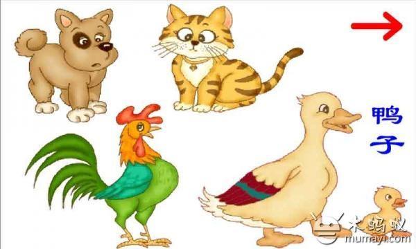 儿童识动物 v1.0图片