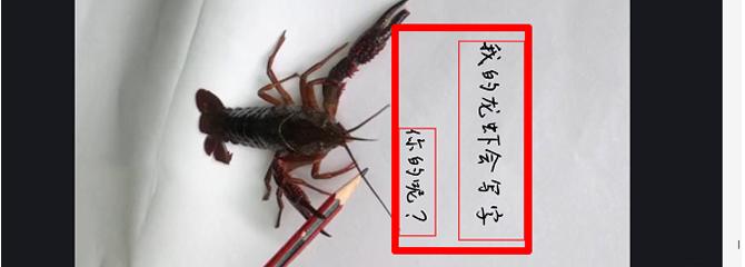 抖音小龙虾写字视频怎么拍 抖音小龙虾写字视频拍摄方法