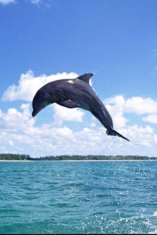 海豚高清壁纸下载_海豚高清壁纸手机版下载_海豚高清