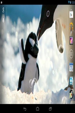 企鹅生活壁纸下载_企鹅生活壁纸手机版下载_企鹅生活