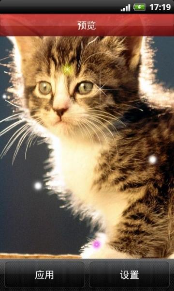 小猫咪动态壁纸,可爱的喵星人那萌萌的表情秒杀了无