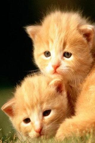 0]  这款壁纸网罗了小猫等可爱一般的动物,或许你忙于工作或许你没有