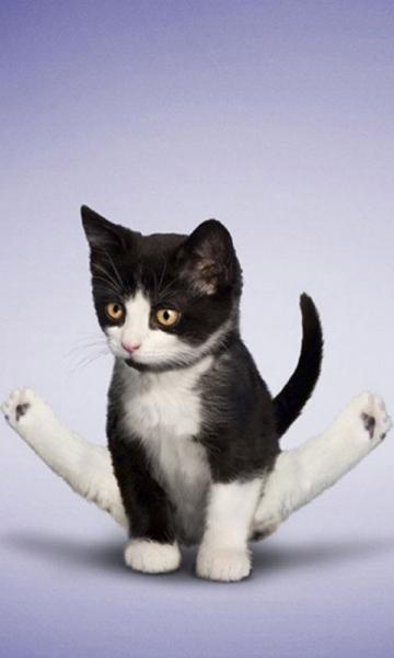 练瑜珈可爱喵星人猫咪壁纸 v3.0