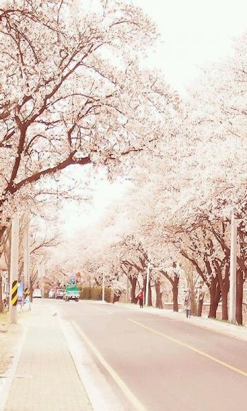 唯美的城市风景动态壁纸