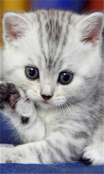 可爱萌宠猫咪动态壁纸